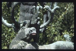 sjiraffer har lang hals fordi